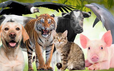 Los Animales que llevamos dentro